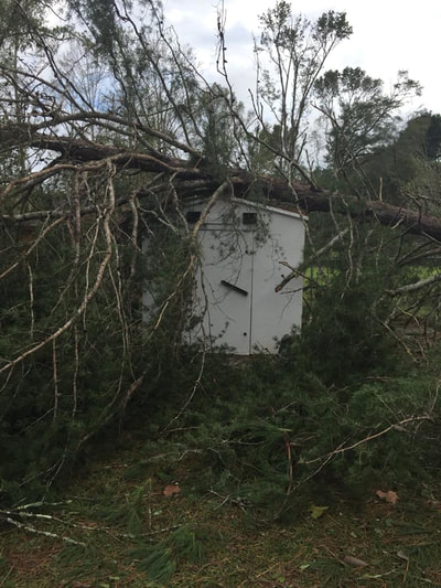 Tree on storm shelter